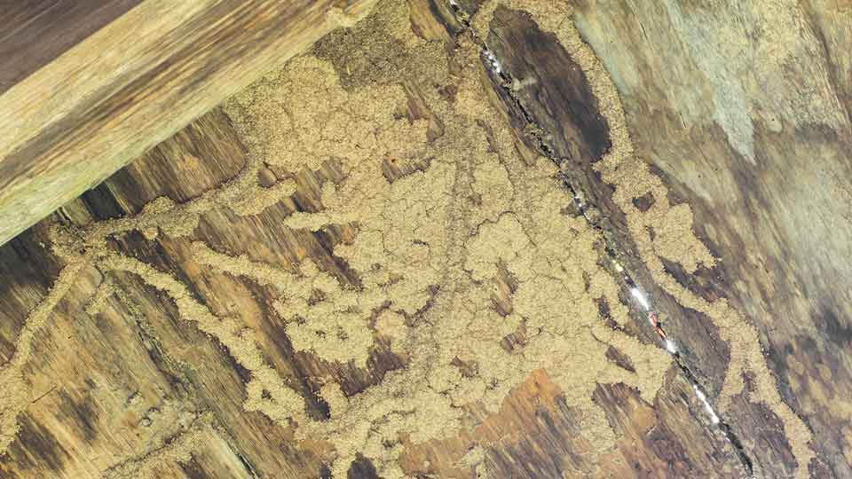 Liberty Termite & Pest Control - Termite Damage