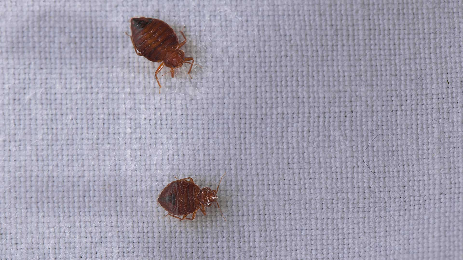 Liberty Termite & Pest Control - Bed Bugs