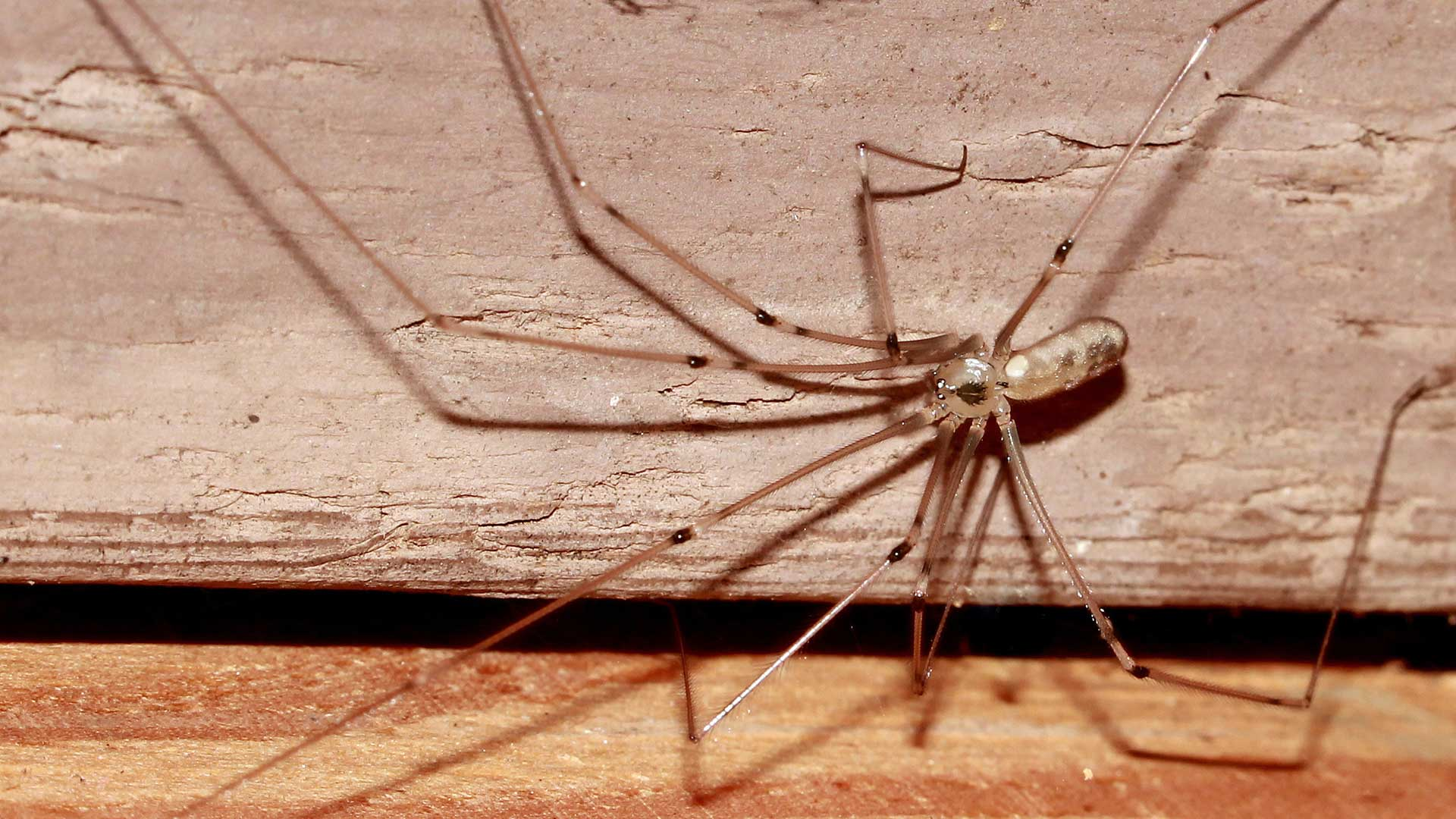 Liberty Termite & Pest Control - Spiders